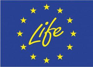 life flag